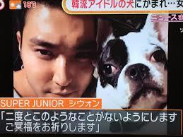 バ韓流スターの飼い犬が近所の住民を噛み殺す