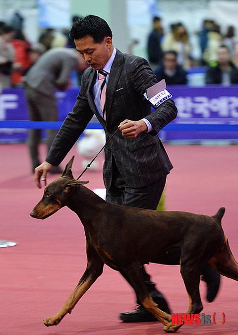 生きることを諦めている韓国の飼い犬