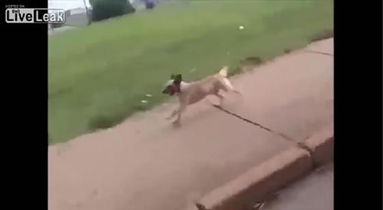 ブラジル_サンパウロ_犬_ワンちゃん_救急車