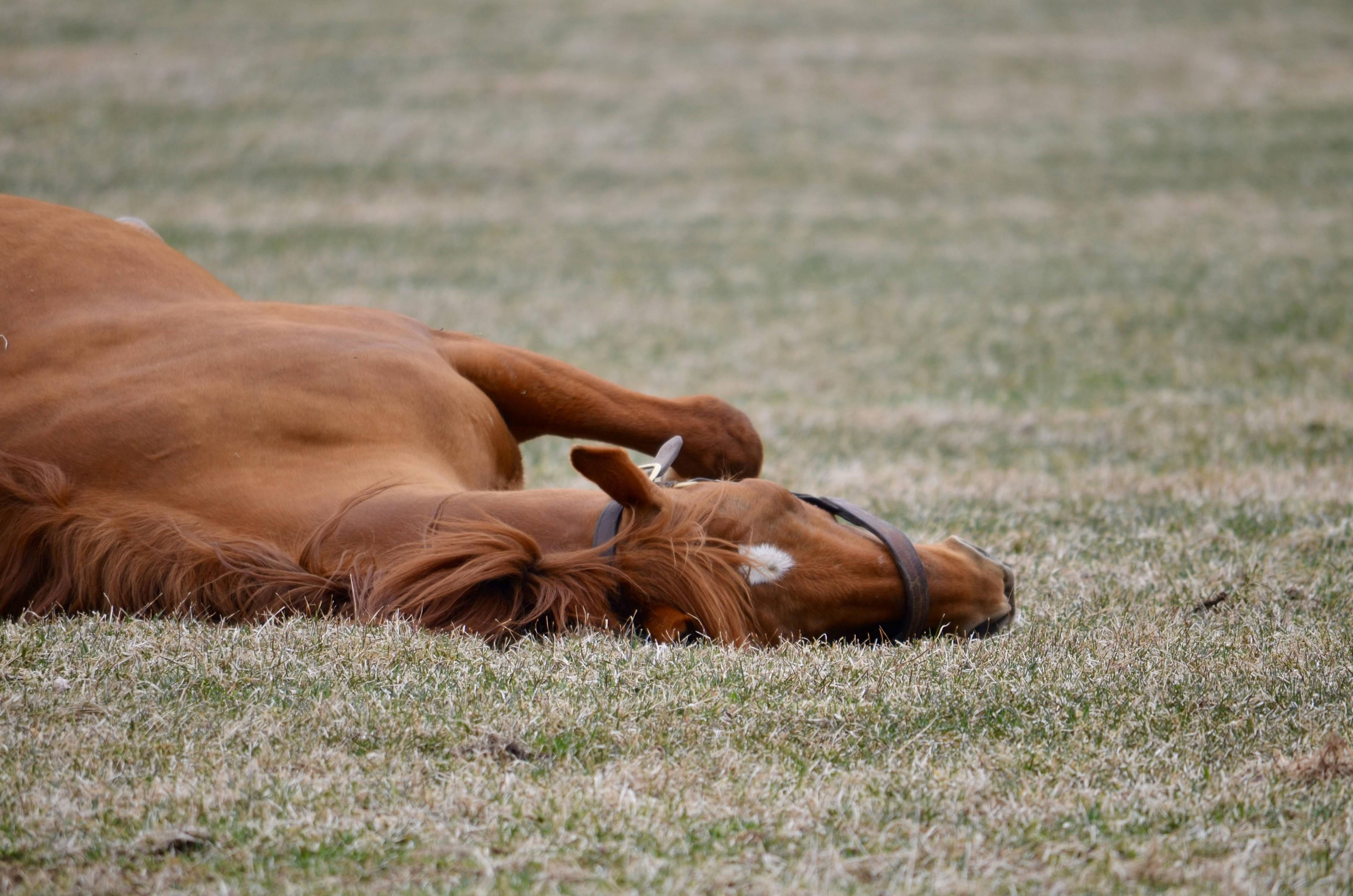 【朗報】グラスワンダー(24)が1歳馬達に人気だと話題に:ハロン棒ch -競馬まとめ