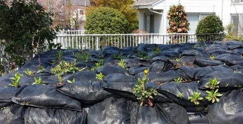 除染ゴミ草