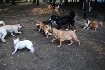 20161009_Dogs