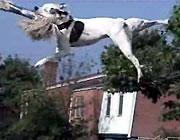 ターザン犬