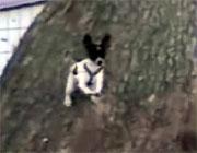 小型犬の逃走劇