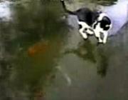 凍った水面を歩く猫