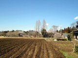 20100311早春の畑