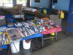 魚市場にて