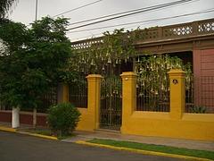 美しい花が咲き乱れるバランコの家