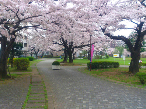 2015_04_01(017)