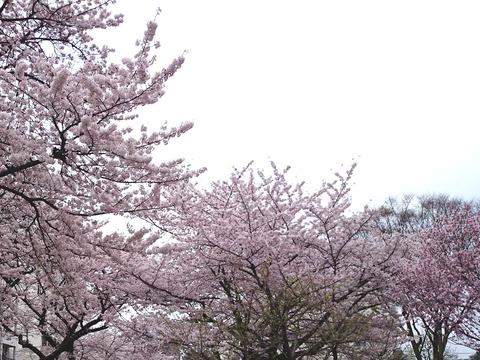 2016_04_01(018)