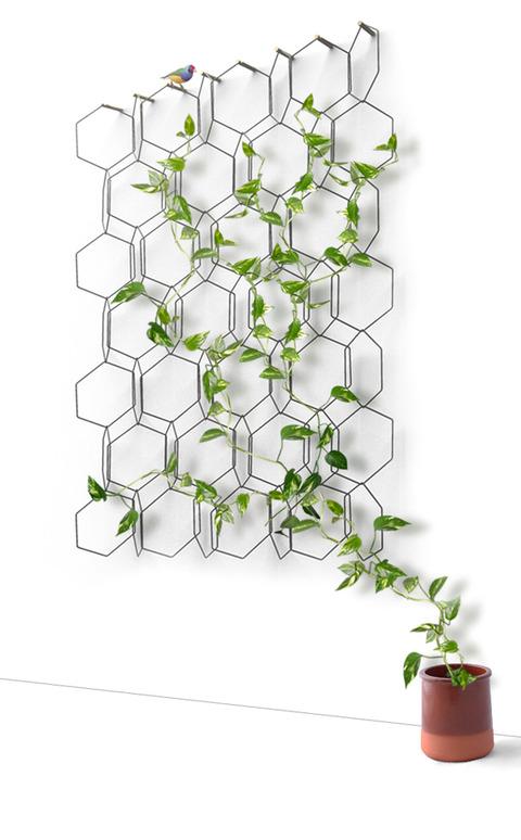 新しい観葉植物のデコレーション