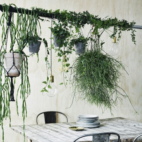DIY 観葉植物を飾ろう!
