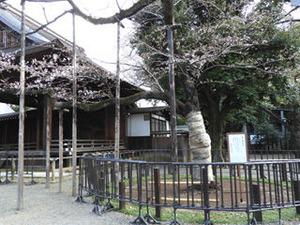 yasukuni20190322_01