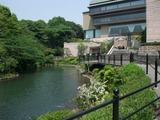 2012-05-16 椿山荘 池