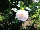 夏の花04