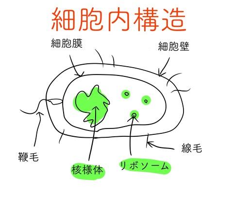 細胞構造2