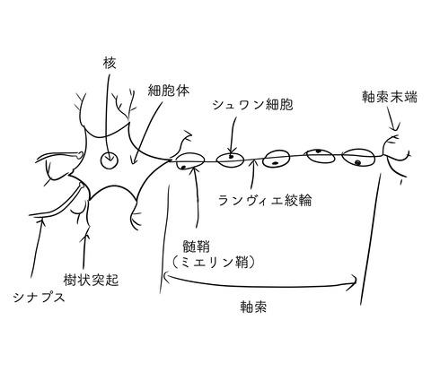 ニューロン〜DHへの道160〜
