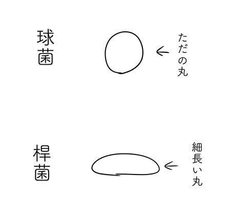 細菌1〜DHへの道169〜