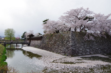 IMGP5784松代城の桜2017-4-19