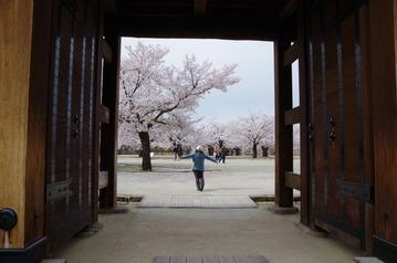 IMGP5762松代城の桜2017-4-19