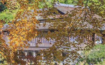 三渓園・臨春閣の黄葉340