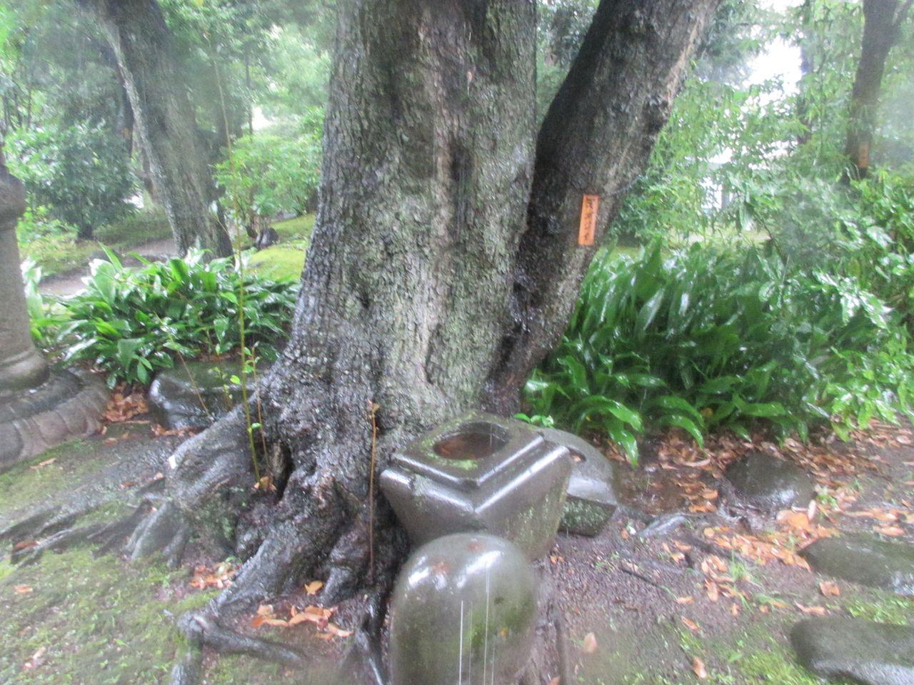 旧安田庭園7