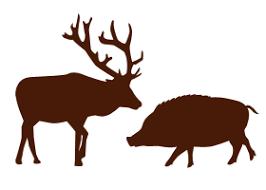 珍しい肉で美味しいの教えて!!ちな今まで食ったことある肉=カンガルー、アリゲーター、うさぎ、ダチョウ、カエル、イノシシ、熊の画像