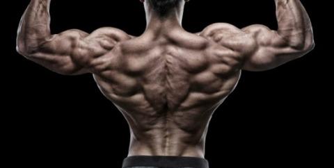 腹筋や胸筋は分かるけど背中の筋肉ってどうやってつけるんだよ