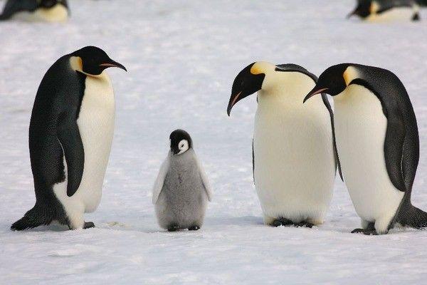 今は「ペンギン女子」がモテるらしいぞ!ってどんなんだよwwwwww