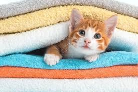 【研究】ネコを飼う女性は健康的であると科学的に証明されるwww