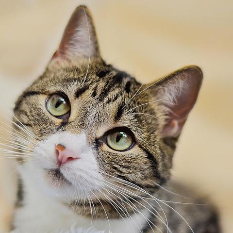 cat-1646566_1280