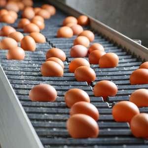 中国「日本の卵かけご飯が美味しそうに見えても、中国では絶対真似しちゃダメ」