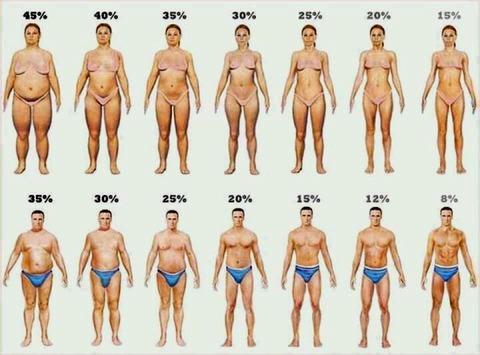 体脂肪別図解