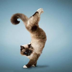 handstand-cat05