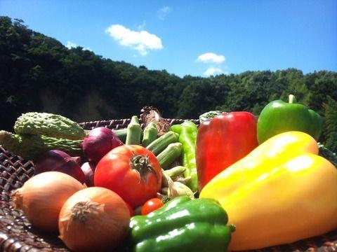 バカ「大学生は野菜が不足しがち。食生活がコンビニ弁当に偏りがち」←これwww