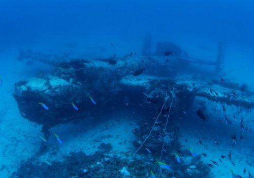 第二次世界大戦で海に沈められた150機の戦闘機!機体にはびっしりとサンゴが!