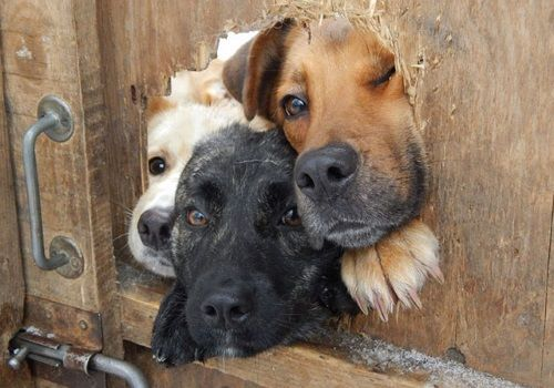 壁や窓にはまってしまった犬たちの可愛すぎる写真をまとめました!