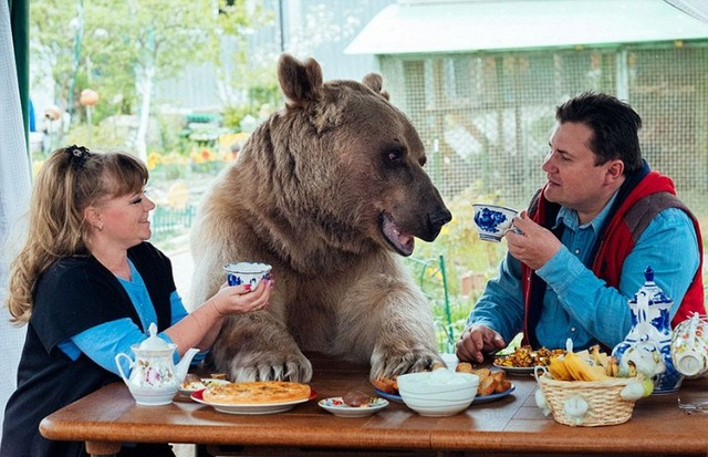 ロシアの夫婦と一緒に暮らしているクマさんがデカすぎるw