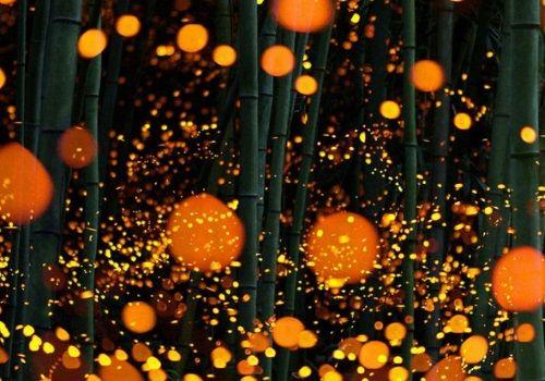 日本で撮影された美しすぎる写真!無数の光の正体はホタルのようです!