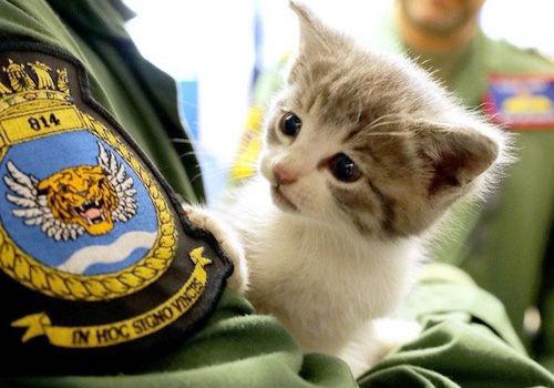 イギリス海軍の車に乗り込んでいた子猫がマスコットに任命されたそうです!