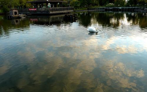 白鳥 荒川自然公園21n10g18n2