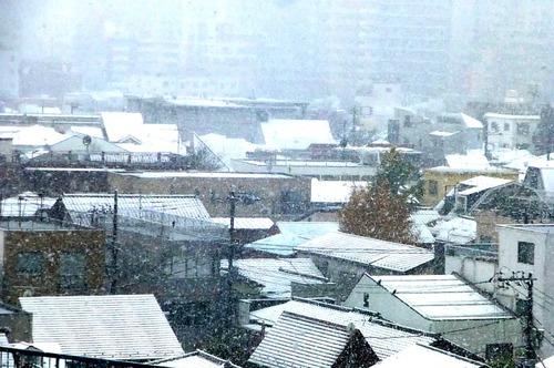 雪16n11g24n02▲twitter