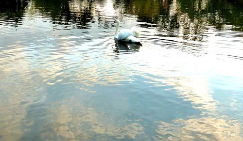 白鳥 荒川自然公園21n10g18n3b