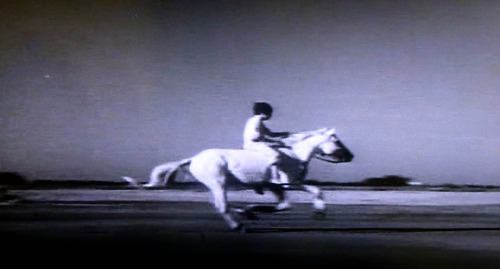 白い馬17n2g9n02