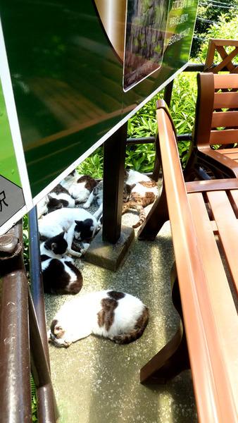 ロープウェイ18n5g23n猫