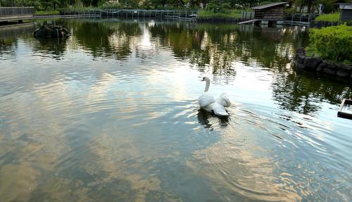 白鳥 荒川自然公園21n10g18n4
