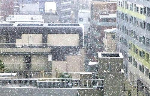 雪16n11g24n04b▲twitter