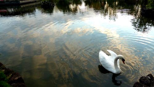 白鳥 荒川自然公園21n10g18n6