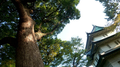富士見櫓16n11g22n02