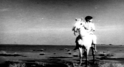 白い馬17n2g9n3